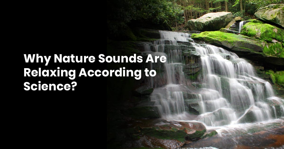 Why Nature Sounds Are Relaxing According to Science